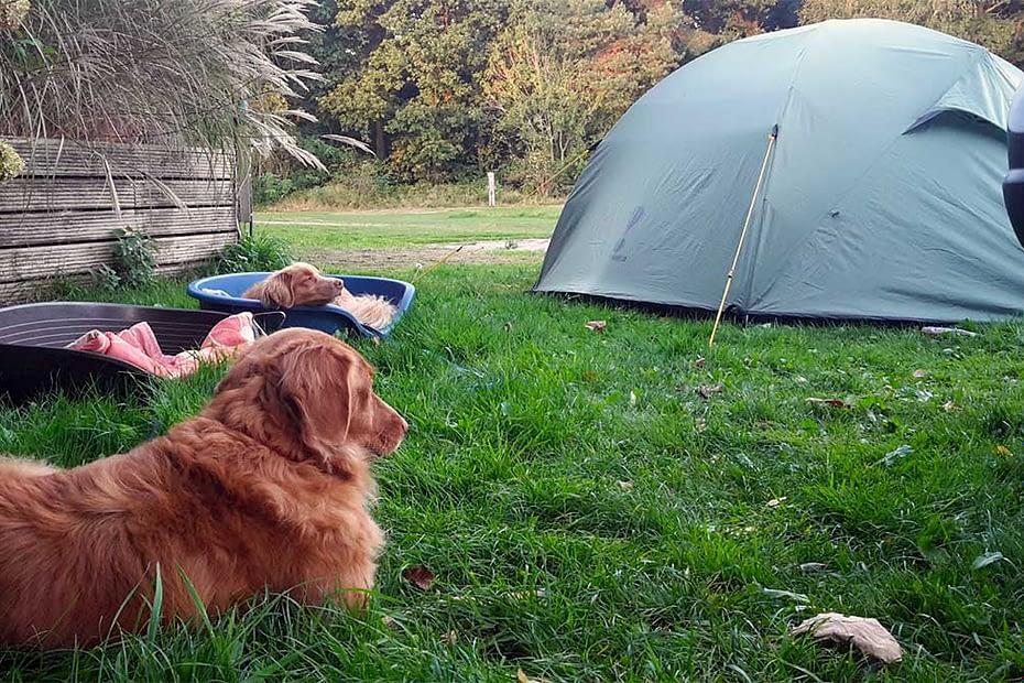 Op vakantie met je hond 1