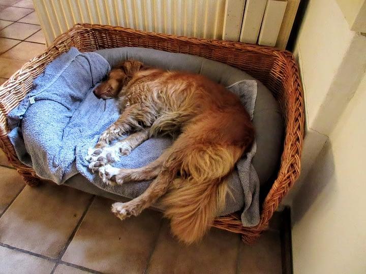 Een hond kan languit liggen op een zacht hondenkussen.