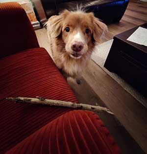 Mijn hond wil de stok ruilen voor een koekje.