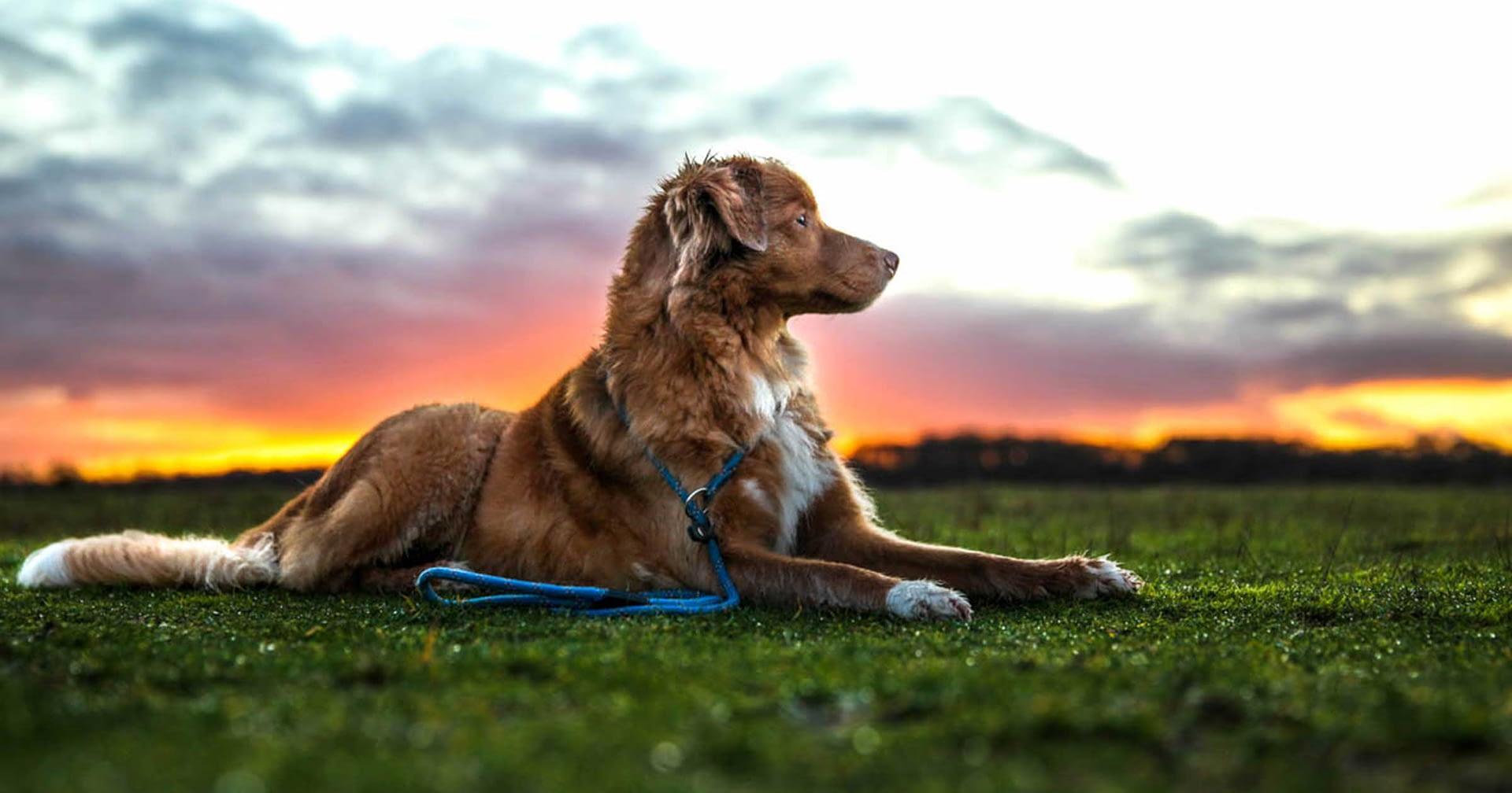 Zlef een foto van je hond maken is mogelijk.