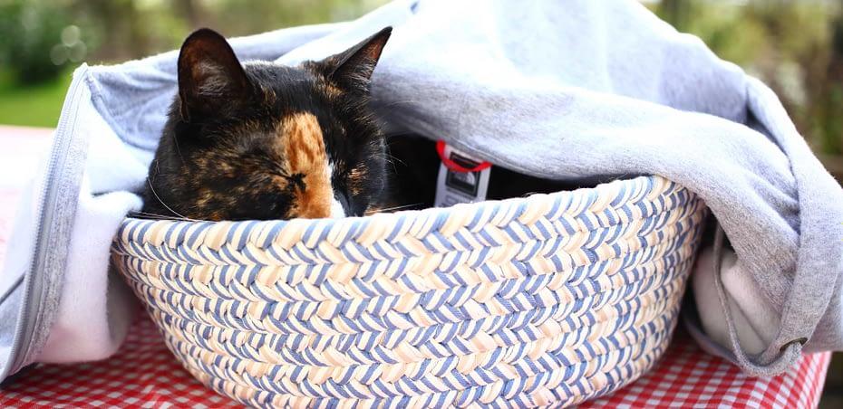 Acuut nierfalen bij je kat is vreselijk, goede verzorging is een must.