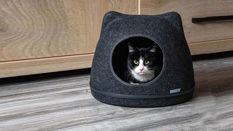 Katteniglo als een poezenmand.