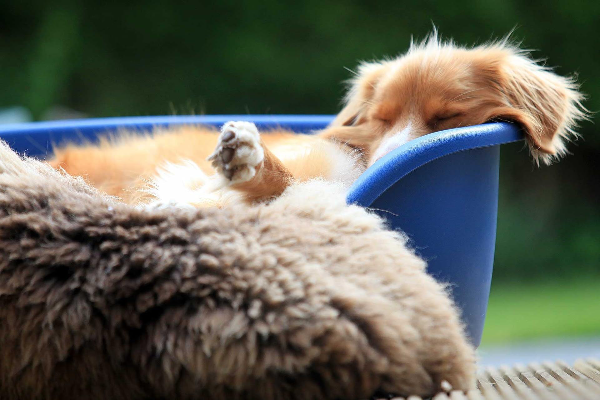 In de mand ligt een hond te slapen. copyright D. van den Hoek.