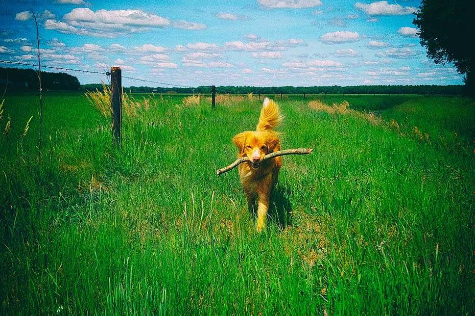 Gratis hondenvoer met mijn kortingscode van tails.com.