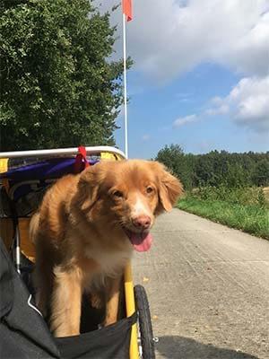 De hond vindt het geweldig in de hondenfietskar van Burley.